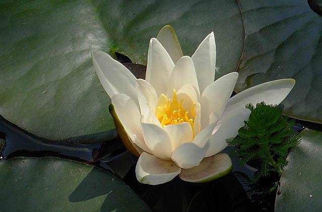 Qi Home : Expertise Feng Shui, Domothérapie